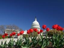 Het Kapitaal van Verenigde Staten met Tulpen Stock Afbeeldingen