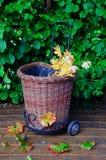 Het karretje van de tuin Stock Afbeeldingen