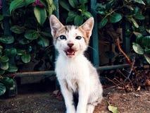 Het katje is in aanvalspositie Royalty-vrije Stock Afbeeldingen