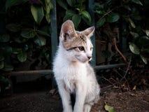 Het katje is in aanvalspositie Stock Fotografie