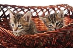 Het katje in de mand Royalty-vrije Stock Afbeelding
