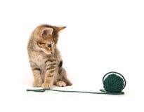 Het katje en het garen van de gestreepte kat Royalty-vrije Stock Foto's