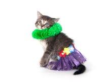 Het katje met hularok en groen legt Stock Afbeeldingen