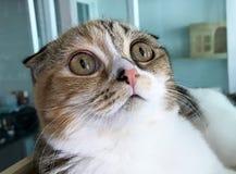 Het katje Schot vouwde Stock Afbeeldingen