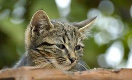 Het katje van Cuten stock fotografie