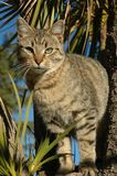 Het Katje van de gestreepte kat in Boom stock foto's