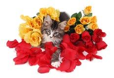 Het katje van de gestreepte kat dat door rozen wordt omringd. Royalty-vrije Stock Foto's