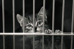 Het katje van de gestreepte kat in een kooi Royalty-vrije Stock Afbeelding