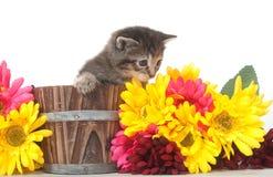 Het katje van de gestreepte kat en kleurrijke bloemen stock foto's