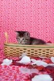 Het katje van de gestreepte kat in mand Stock Fotografie