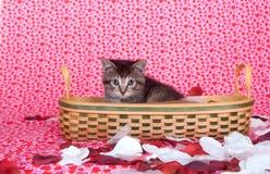 Het katje van de gestreepte kat in mand Stock Foto