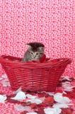 Het katje van de gestreepte kat in rode mand Royalty-vrije Stock Foto's