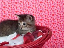 Het katje van de gestreepte kat in rode mand Stock Foto's