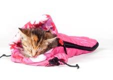 Het katje van de gestreepte kat in slaapzak Royalty-vrije Stock Afbeelding