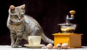 Het katje van de gestreepte katkleur op de lijst samen met een koffiemolen een kop korrels en noten royalty-vrije stock foto's