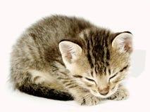 Het katje van de slaap Stock Foto