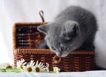 Het katje van de zomer Stock Foto's