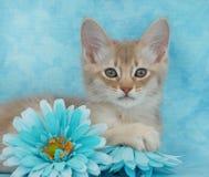 Het katje van Fawn onder bloemen Stock Foto's
