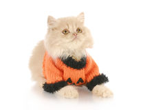 Het katje van Halloween Stock Afbeelding