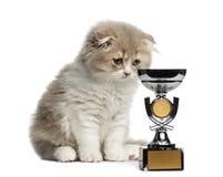 Het katje van hooglandvouwen met trofee die onderaan geïsoleerd op wit kijken Stock Fotografie