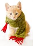 Het Katje van Kerstmis Royalty-vrije Stock Afbeeldingen