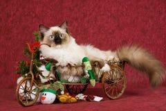 Het katje van Ragdoll in de wagen van Kerstmis stock foto