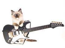 Het katje van Ragdoll met mini elektrische gitaar Stock Foto