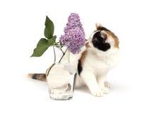 Het katje van Tricolor en lilac tak Stock Foto