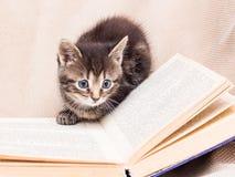 Het katje wordt gespeeld rond een open boek Het kind leert aan Re stock afbeelding