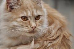 Het katje ziet vooruit Stock Foto's