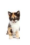 Het katje zit Stock Fotografie