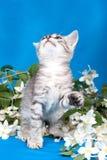 Het katje zit in bloemen stock afbeeldingen