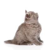 Het katjeszitting van baby Britse shorthair in profiel en omhoog het kijken Geïsoleerde Royalty-vrije Stock Fotografie