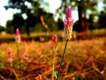 Het katoenen gras een hoge vlucht nemen royalty-vrije stock afbeeldingen