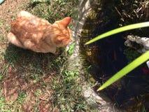 het kattenhorloge Stock Foto's