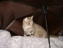 Het kattenkatje zit op de bank onder een paraplu Stock Fotografie
