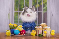 Het kattenoverhemd begroet gasten in Pasen royalty-vrije stock foto