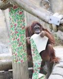 Het kauwen op Kerstmis Royalty-vrije Stock Foto