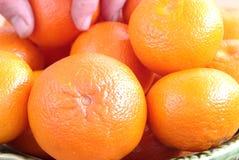 Het kiezen van mandarin Royalty-vrije Stock Afbeelding