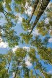 Het kijken aan de bomen van grond Stock Foto's