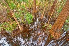 Het kijken neer in de Donkere Wateren van een Cipresmoeras Stock Foto