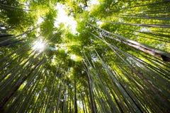 Het kijken omhoog aan de hemel in een bamboebos royalty-vrije stock afbeelding
