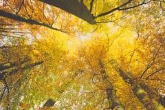 Het kijken omhoog in bomen met brede hoek Royalty-vrije Stock Foto