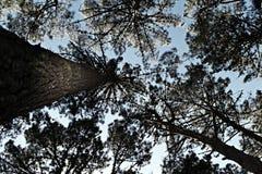 Het kijken omhoog - Bos Stock Foto's