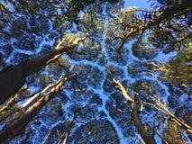 Het kijken omhoog in bos royalty-vrije stock fotografie