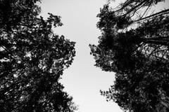 Het kijken omhoog de bomen in de herfstbos royalty-vrije stock foto
