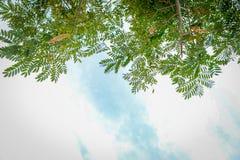 Het kijken omhoog door boomtakken tegen blauwe hemel stock foto's