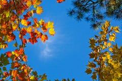 Het kijken omhoog door de bladeren Royalty-vrije Stock Foto's