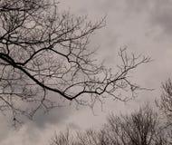 Het kijken omhoog door naakte bomen in een bewolkte hemel Stock Foto's