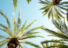 Het kijken omhoog in een palm royalty-vrije stock foto's